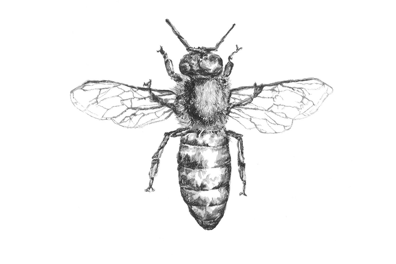 demarinis_multitone-bee2