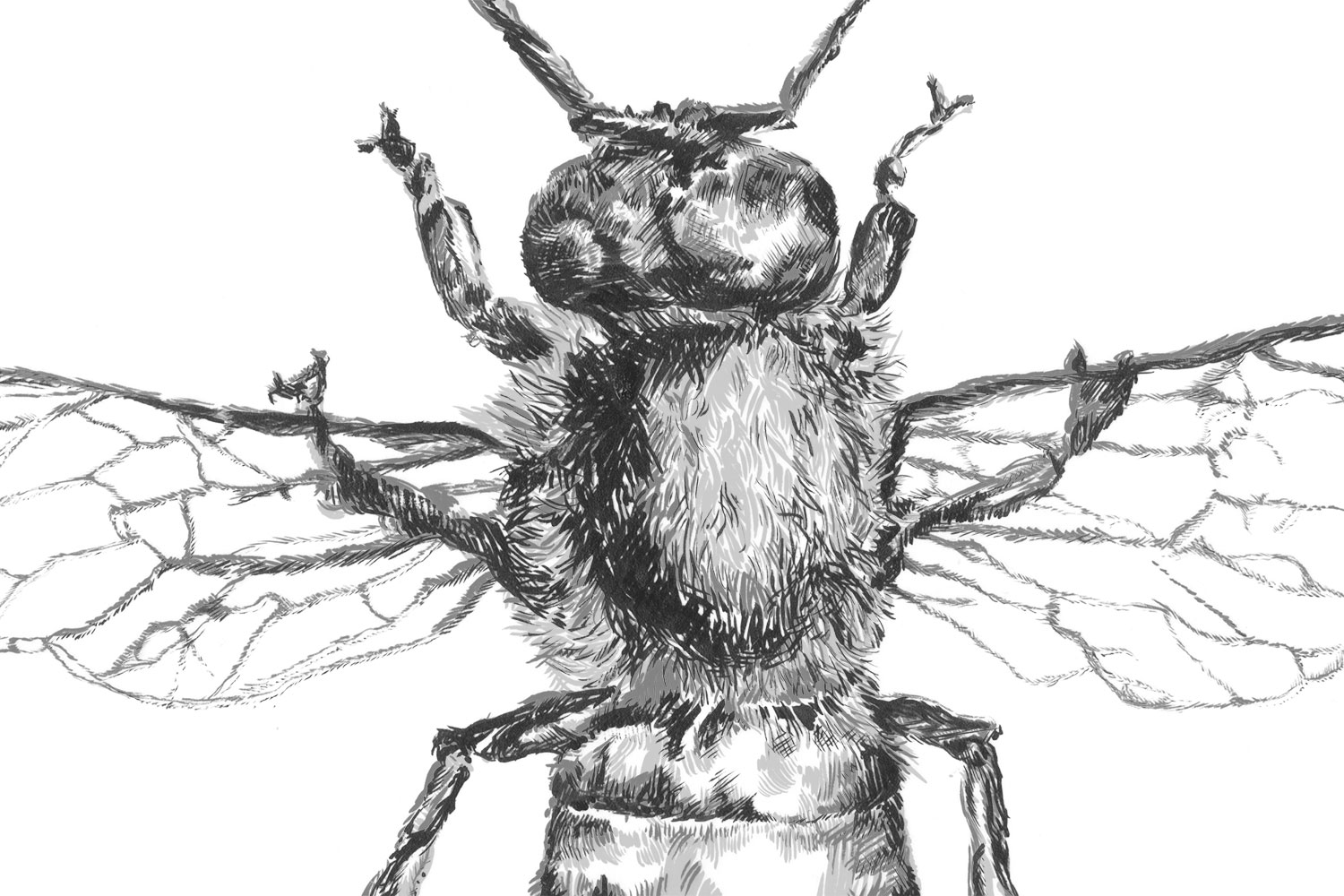 multitonelayer-bee-detail
